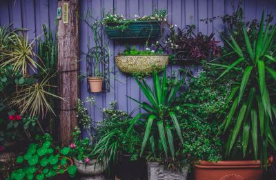 Perfect garden plants for patios